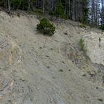 Roadcut in Rocky Mountain National Park, CO thumbnail