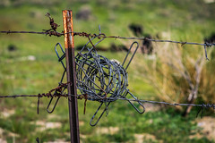 Leftover (davidseibold) Tags: america barbedwire barbedwirefence benaroad california grass jfflickr kerncounty photosbydavid plant postedonflickr rust unitedstates usa wildflowerhill caliente