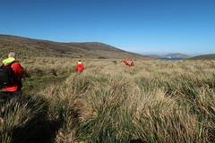2018-102761 (bubbahop) Tags: 2018 antarcticatrip falklandislands newisland hike