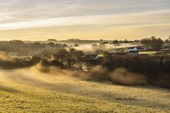 Talgarreg (dannie843) Tags: mist december morning frost talgarreg wales cymru ceredigion village fields grass trees dawn sunrise