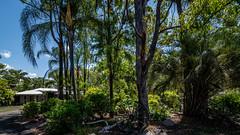 KB2_6632 (Kev Byrnes Photography) Tags: brisbane queensland australia au