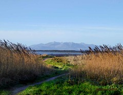 Arran 17Jan19 Ardrossan Grass1 (g crawford) Tags: ayrshire northayrshire crawford clyde riverclyde firthofclyde water arran ardrossan