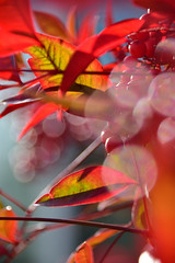 RGB (James_D_Images) Tags: closeup backlit plant red leaves green blue bokeh specular highlights dof stems