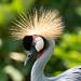 Angry bird?