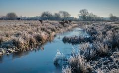 Frozen (Ingeborg Ruyken) Tags: januari 500pxs january empel winter natuurfotografie instagram 2019 flickr ochtend