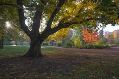 A quiet morning (RdeUppsala) Tags: uppsala uppland paisaje park parque stadsträdgården garden jardín plantas plants trees träd trädgård autumn árboles otoño höst ricardofeinstein sverige suecia sweden sunrise amanecer morning morgon mañana