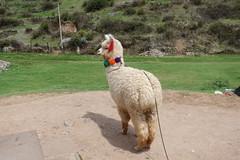 Peru Cusco - Christus Statue (Alf Igel) Tags: peru cusco cuzco cusqo cusqu christus jesus statue südamerika southamerica anden alpaca inca incas