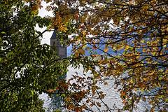 Der Turm hinter Blättern (Helmut Reichelt) Tags: turm blätter golden reschensee lagodiresia stausee see reschenpass kirchturm versunken berge südtirol alto adige italien oktober herbst gebirge landschaft landscape leica leicam typ240 captureone11 dxophotolab leicasummilux35mmf14asphii
