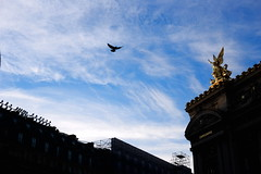 Wings (Gwenaël Piaser) Tags: unlimitedphotos gwenaelpiaser canon eos 6d canoneos eos6d canoneos6d fullframe 24x36 reflex rawtherapee 50mm canonef50mmf18 canonef canonef50mmf18ii ef50mmƒ18 prime niftyfifty paris parigi france francia îledefrance november novembre 2018 november2018 sky bird clouds ciel oiseau opéra golden wings ailes vol fly