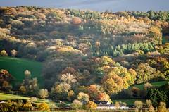 Autumn Colours (Doolallyally) Tags: whitedowncopse autumn trees colour devon england