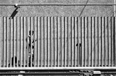 2019-♈-020 (ruggeroranzani_RR) Tags: analog blakandwhite 35mm film rolleiretro80s kodakhc110 nikonfm2 nikkorhcauto118f85mm man geometric shadow railwaystation venice