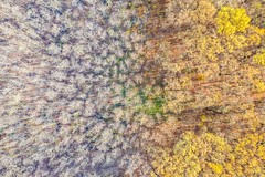The World's End (icemanphotos) Tags: aerial drone view birds eye views fly autumn fall trees above colorful magic world earth