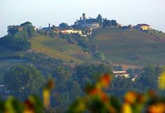 Neive 4 Langhe 18 (zanf89) Tags: neive alba langhe piemonte colline vino barolo nocciole