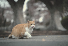 one step (tomomichi_ito) Tags: cat animal japanesepaper