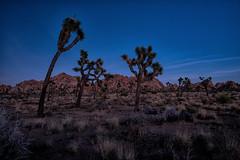 untitled (11 of 28).jpg (xen riggs) Tags: desert california joshuatreenationalpark february2018