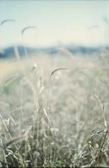 フィルムの中の秋 (あおい.) Tags: japan nature autumn film pentaxsp 日本 自然 秋