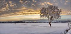 Lichtblick (Robbi Metz) Tags: deutschland germany bayern bavaria reischenau augsburgwestlichewälder landscape tree sky clouds sunrise snow colors canoneos