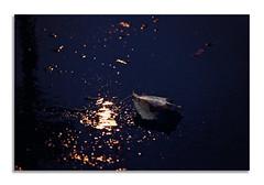 _BRK5863 (kasio69) Tags: dark reflections bokeh blue light pudle leaf yellow fall boriskasimov kasio69 nikon nikond7000