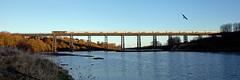 GBRf (Gull Bombs Railfot) (Richie B.) Tags: 6n22 west sleekburn northumberland gbrf great britain railfreight brush traction procor mirrlees class 60 60095