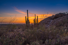Desert Evening Sunset (Stuart Schaefer Photography) Tags: landscape goldenhour tucson sonya7m3 sunset travel arizona cactus sonyalpha outdoors outdoor saguaronationalpark evening silhouette dusk