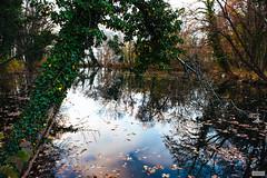 Overgrown (The Hobbit Hole) Tags: castrle castle waterrcastle tree sclhoss water austria d700 nikon pottendorf österreich river fischa