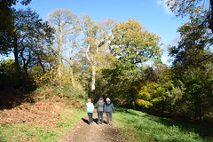 Underway (Worthing Wanderer) Tags: nymans clouds autumn november sunny sussex westsussex park nationaltrust woodland woods forest