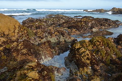 Filling tide pools (afagen) Tags: california pacificgrove asilomarstatebeach montereypeninsula asilomar beach pacificocean ocean tidepool