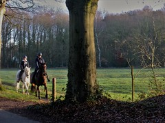 Horseriding in Gaasterland (Alta alatis patent) Tags: gaasterland landscape elfbergen beukenlaan horseriding