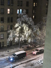 2018 November Evening Blizzard Snow Tree - Front Yard 5102 (Brechtbug) Tags: 2018 november evening blizzard snow storm front yard hells kitchen clinton near times square broadway nyc 11152018 new york city midtown manhattan snowing storms snowstorm winter weather building fog like foggy hell s nemo southern view ny1snow