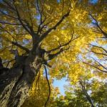 Ancient Tree thumbnail