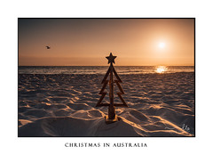 Christmas in Australia (sugarbellaleah) Tags: sunrise christmas christmastree beach tree rustic timber wooden sand seashore morning seagull sky light shadow seaside australia outdoor holiday festive religion celebration holy landscape texture patterns season summer christianity spiritual giving background copyspace scenery beautiful glory pretty faith love sunlight thisisaustralia