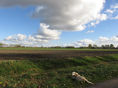 's Heerenhoek (Omroep Zeeland) Tags: hond rust uit