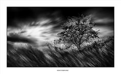 Black Friday !!!! (michel di Méglio) Tags: bw landscape tree marseille monochrome arbre