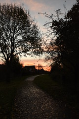 Smith's Walk, Woosehill, Wokingham (rq uk) Tags: rquk nikon d750 autumn woosehill nikond750 afsnikkor1835mmf3545ged leaves smithswalk wokingham