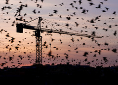 View from my office (Robert Barone) Tags: italia italy micro43 panasonicgm1 roma rome sturnidae universitàdiroma birds dusk flocks flying mating murmuration sapienza starlings storni sunset crane silhouettes