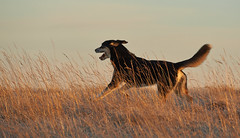 24-november-kotlugengi-rockville_036 (Stefán H. Kristinsson) Tags: venus kötlugengið nikond800 nikon70200f4 reykjanes winter november 2018 iceland vetur sunset red dog dogs hundur hundar
