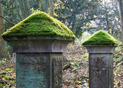 Derwent hall gate posts. (S.K.1963) Tags: derwent hall gate posts lady bower moss trees woods peak district derbyshire walk ashopton olympus omd em1 mkii 40150mm 28 pro bokeh dof