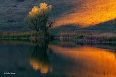 Dernières lumières sur le lac (didier95) Tags: arbre lac lathuile savoie reflet automne orange lumiere