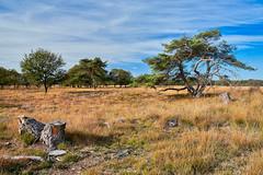 Delleburen (Henk van Oosten) Tags: delleburen oldeberkoop friesland netherlands itfryskegea natuur nature landscape landschap d610