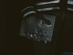 What Spell Should I Cast Next? (Brian D' Rozario) Tags: brian19869 briandrozario nikon d750 speedlite offcamera strobe strobist ring rings finger notebook magic goth gothic mood creative rembrandt magical grip mystic mystical mystique dark