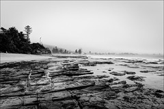 Play Misty for Me (JustAddVignette) Tags: australia beach blackandwhite clouds cloudy cloudysunrise collaroy dawn fog headland hightide landscapes monochrome newsouthwales northernbeaches ocean rocks sand seascape seawater sky swell sydney water waves