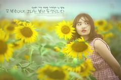 SunFlower - YenNhi