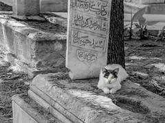 Just a pair of eyes... (e.colombo17) Tags: passionforphotography inspiration arabianatmosphere ancienttombs ancientcemetery eyesofthecat greenbeautifuleyes greeneyes summervibes2k18 summervibes cyprusisland cyprus2k18 summer2k18