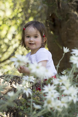 (louisa_catlover) Tags: portrait family child toddler daughter tabitha tabby maranoa maranoagardens outdoor nature garden afternoon spring november melbourne victoria australia flowers flannelflowers australian native bokeh dof canon 60d 100mm