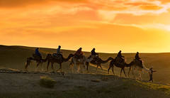 Cameltour. (Robert Mehlan - Munich) Tags: canon5dmkii atlasgebirge atlas robertmehlan camel marocco marokko landschaft