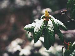 Garden Winter Bokeh - Tarbek - 19. Januar 2015 (torstenbehrens) Tags: garden winter bokeh tarbek 19 januar 2015