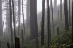 Cut Short (kephart_kyle) Tags: cannonbeach coast ecolastatepark fall fog foliage forest mist october oregon rain rainforest trees