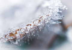 ice crystals in nature (JosjeToby) Tags: ice crystals naturephotography nature macro macrophotography macromood macrodreams macros winter winter2018 cold sonya6000 priborn germany