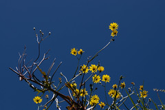 IMG_4228 (Daniel Menzies) Tags: sky bluesky plants newzealand canon80d tamron90mm28 flowers