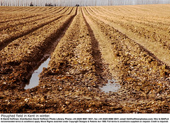 Ploughed Field Kent 02 (hoffman) Tags: agrarian agribusiness agricultural agriculture agronomy boggy british britishisles brown convergence converging countryside crop cultivated cultivating cultivation davidhoffman daylight earth ec eec england english environment environmental eu europe europeanunion farm farming farmland field furrows greatbritain horizontal landscape mud muddy nature outdoors paralax parallax parralax parrallax peaceful peacefulness plant ploughed ploughing plowed plowing pool puddle ridges rural scenery scenic soil stony tranquil tranquility uk unitedkingdom vanishingpoint water windbreak winter 181112patchingsetforimagerights wwwhoffmanphotoscom